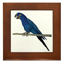Hyacinth Macaw Framed Tile