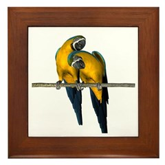 Blue N Yellow Macaw (Pair) Framed Tile
