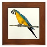 Blue N Yellow Macaw Framed Tile