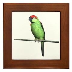 Thick Bill Parrot Framed Tile