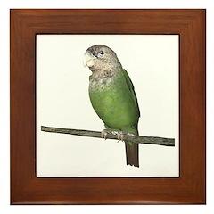 Cape Parrot Framed Tile