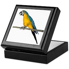 Blue N Yellow Macaw Keepsake Box