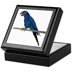 Hyacinth Macaw Keepsake Box
