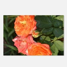 roses in flames Postcards (Package of 8)