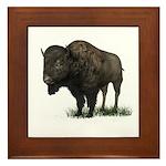 Bison (Buffalo) Framed Tile