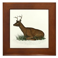 Deer (buck) Framed Tile