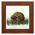 Box Turtle Framed Tile