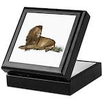 Lion Keepsake Box