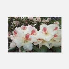 Hello Rhododendron Magnets