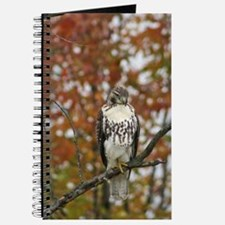 Red Tailed Hawk Photo Journal