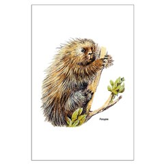 Porcupine Posters