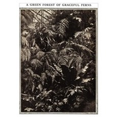 Graceful Ferns Poster
