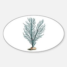 vintage coral Sticker (Oval)