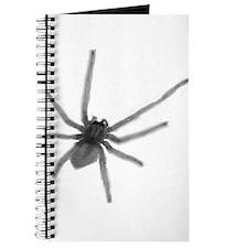 Spider 01 Journal