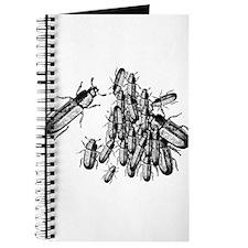 Pile o' Beetles Journal