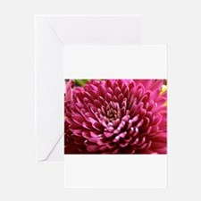 Cute Focus on gorgeous Greeting Card