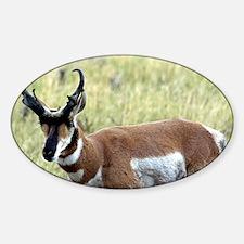 Antelope Decal