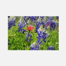 Cool Indian paintbrush Rectangle Magnet