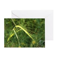 Spring Wheat Photo Greeting Card