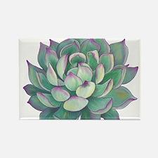 Succulent plant Magnets