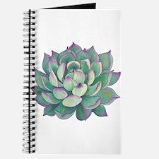 Succulent plant Journal