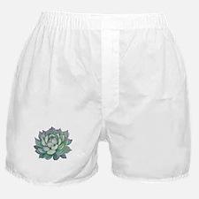 Succulent plant Boxer Shorts
