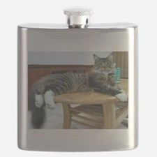 maine coon laying 2 Flask