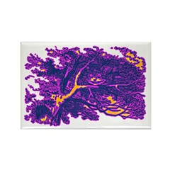 Disappearing Cheshire Rectangle Magnet (100 pack)