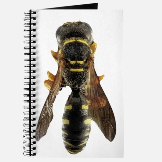 Wasp Insect Journal