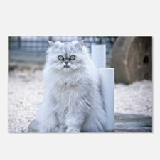 persian chinchilla Postcards (Package of 8)