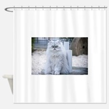 persian chinchilla Shower Curtain