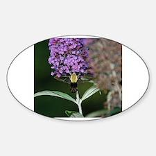 Cute Hummingbird moths Sticker (Oval)