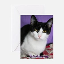 Cats Haven Rescue 111 Greeting Card