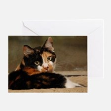 Cute Calico cats Greeting Card