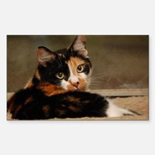 Funny Calico cat Decal