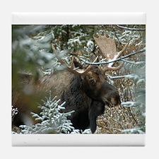 Bull Moose 2 Tile Coaster