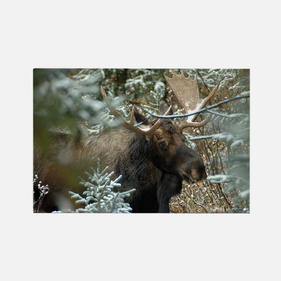 Bull Moose 2 Rectangle Magnet
