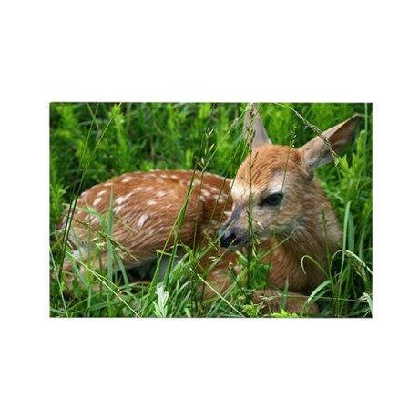 Spotted Fawn Rectangle Magnet
