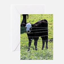 Calf Greeting Cards