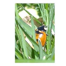 Ladybug Postcards (Package of 8)