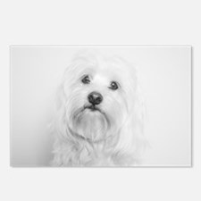 Coton de Tulear Head Tilt Postcards (Package of 8)