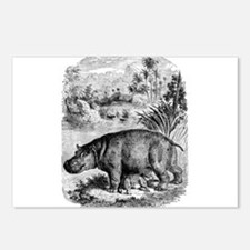 Vintage Hippopotamus Baby Postcards (Package of 8)