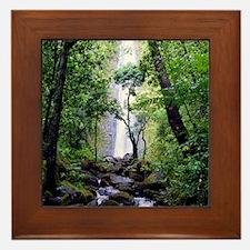 Manoa Falls Hawaii Framed Tile