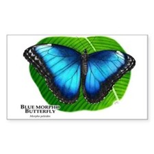 Blue Morpho Butterfly Rectangle Decal