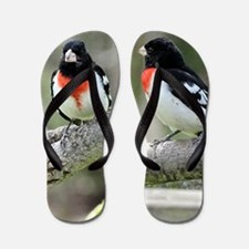 Rose breasted grosbeak Flip Flops