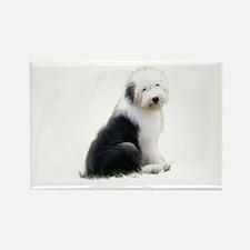 old english sheepdog puppy sitting Magnets