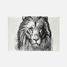 Vintage Lion Head Lions Black White Magnets