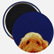Golden Doodle Magnets