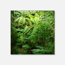 Punga Tree Ferns NZ Sticker