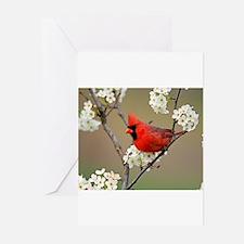 Red Cardinal Photo Greeting Cards